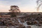 A Frosty Mogshade Hill