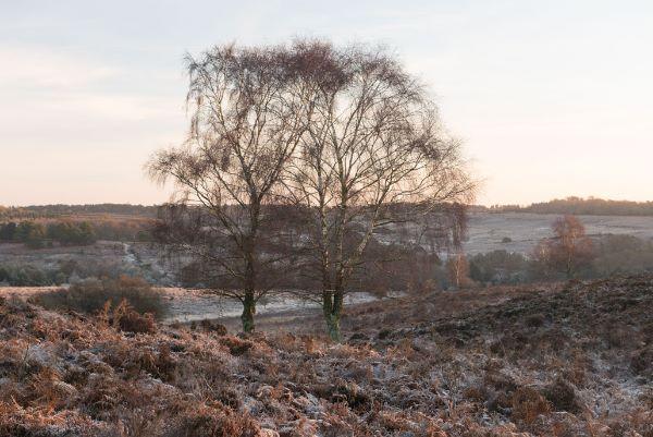 Mogshade Hill in Winter