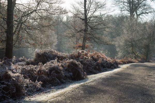 Winter Frost in Denny Wood