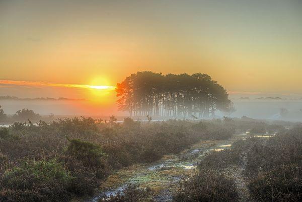 A Frosty Dawn