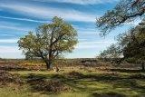 Mogshade Hill