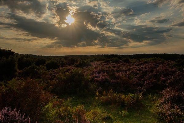 Mogshade Hill Evening Light