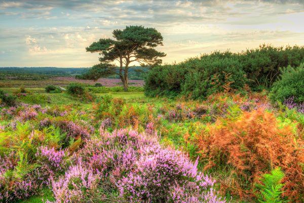 Bratley View
