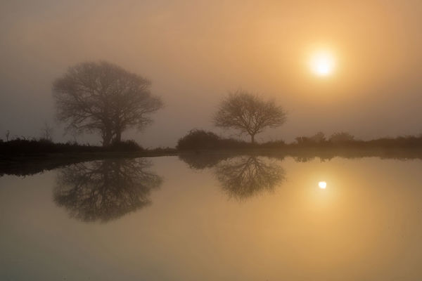 Mogshade Pond at Dawn