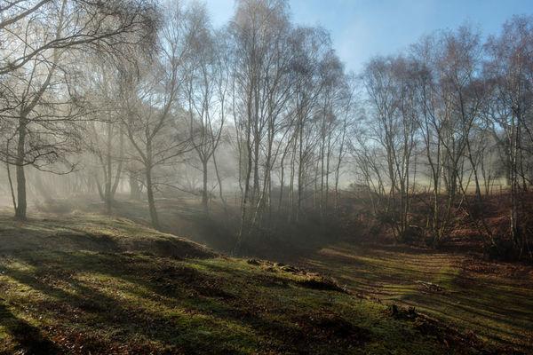 Mist and Light