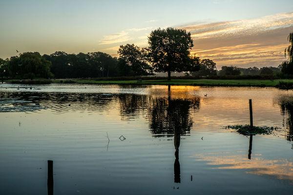 Dawn at Heron Pond