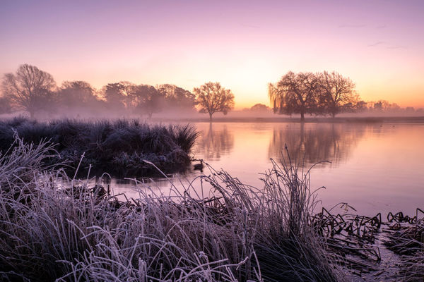 Frosty Heron Pond