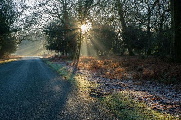 Bolderwood in Winter 1