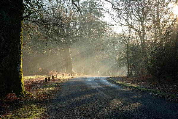 Bolderwood in Winter 2