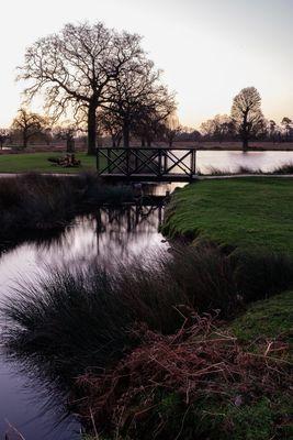 Bushy Park at Dawn