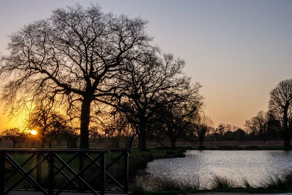 Sunrise at Bushy Park