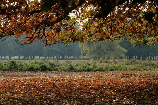Autumn at Bushy Park London