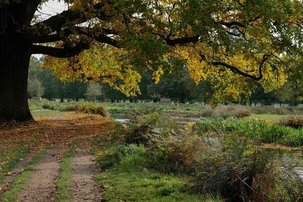 Bushy Park Pathway