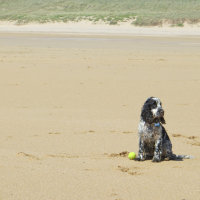 Satchel with Loxley's ball at Constantine Bay