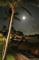 Night palm, Aruba