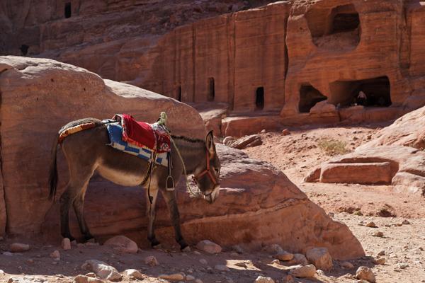 Donkey in shade, Petra