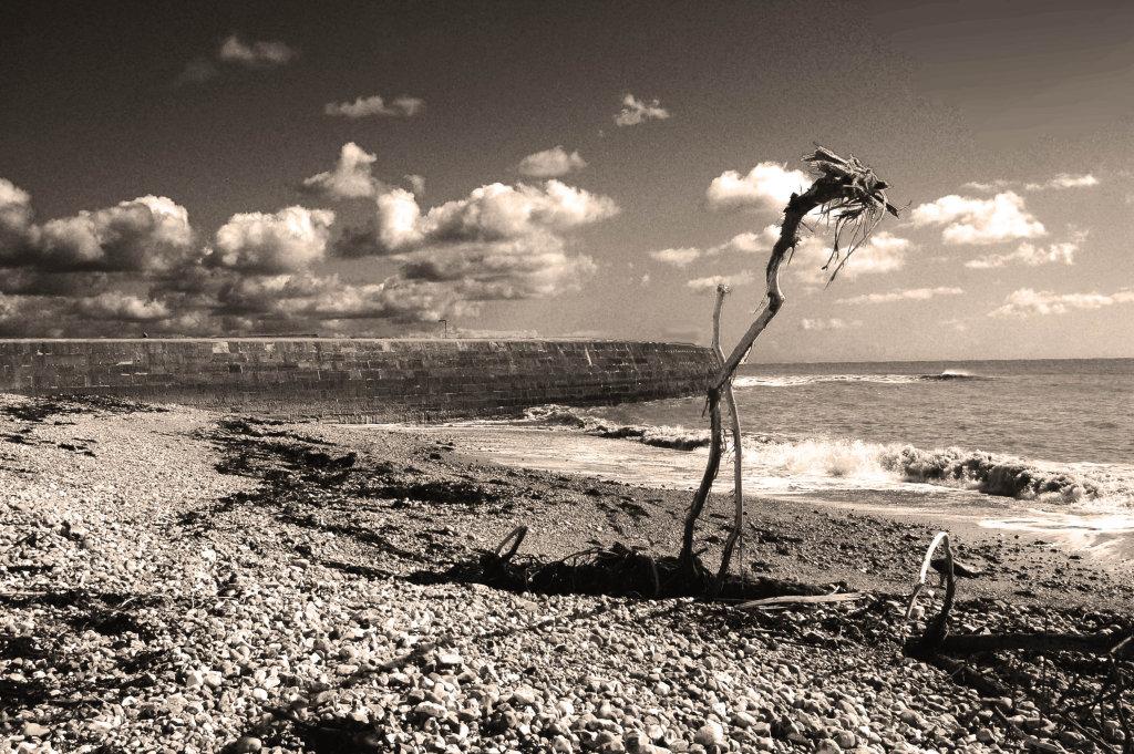 Monmouth Beach Lyme Regis March 2014