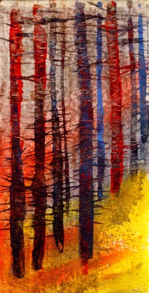 Evening Light Conifer Wood