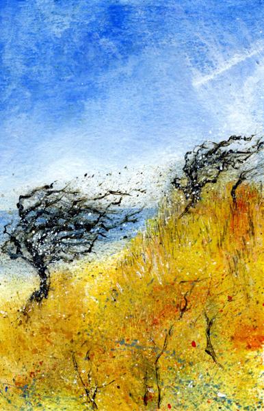 Windswept on the Dunes