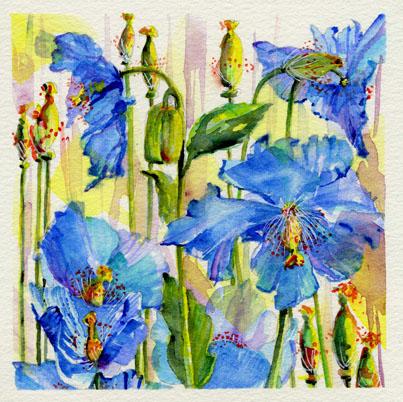 garden blue poppies