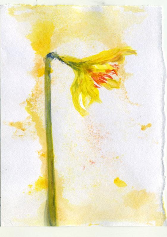 Daffodil 4  - 1 minute sketch