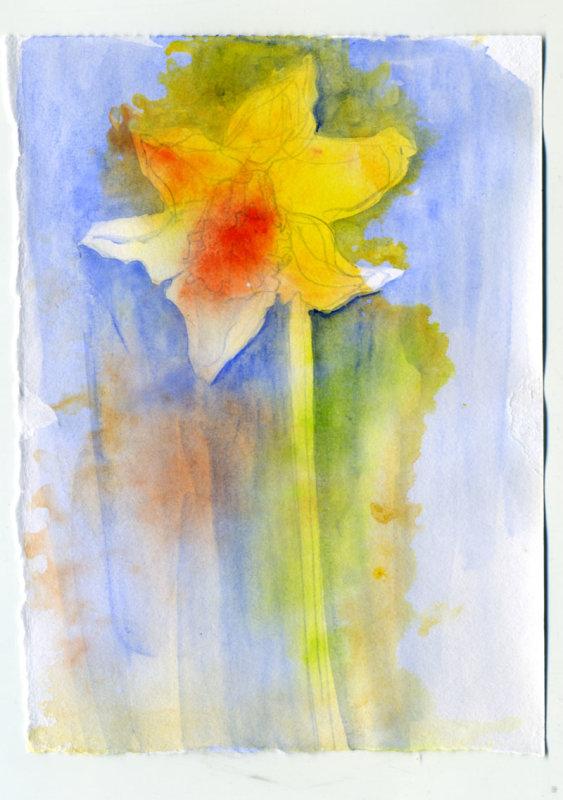 Daffodil 5 - 1 minute sketch