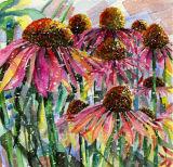 Echinacae Summer