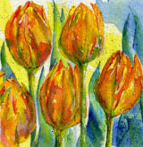 flame tulips