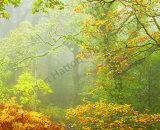 Exmoor Rain Forest
