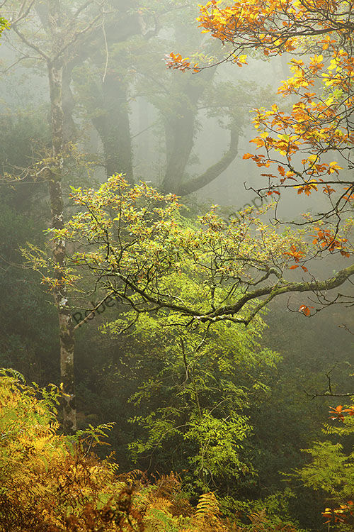 This image is from Horners Wood in a misty morning