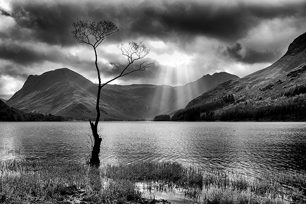 Lone Tree in a Storm