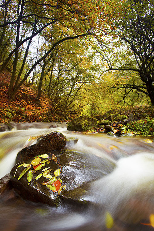 Autmn River image in Horners Wood Exmoor