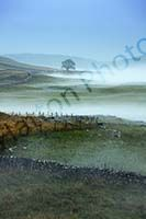 Blog Frozen Dales