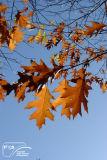 Autumn 165