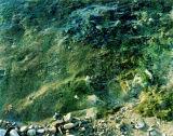 Embo Beach-water seeping over rocks