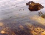Rock & Sunlight, Loch Fleet