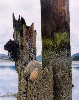 Rocks in pier timbers