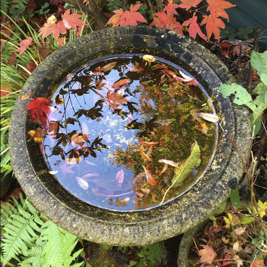 3rd Richard Hopkins ---Bird Bath