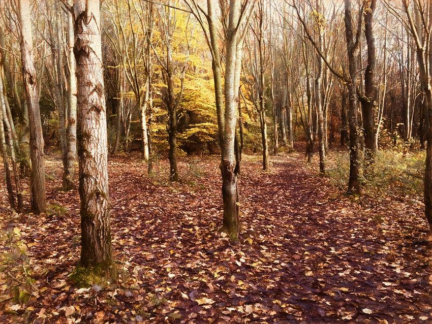 2nd - Richard Hopkins ---Gover Road Woods