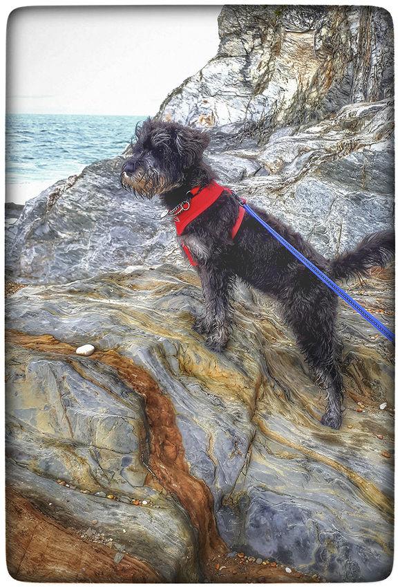 = 1st Hopkins, Teresa Sea Dog