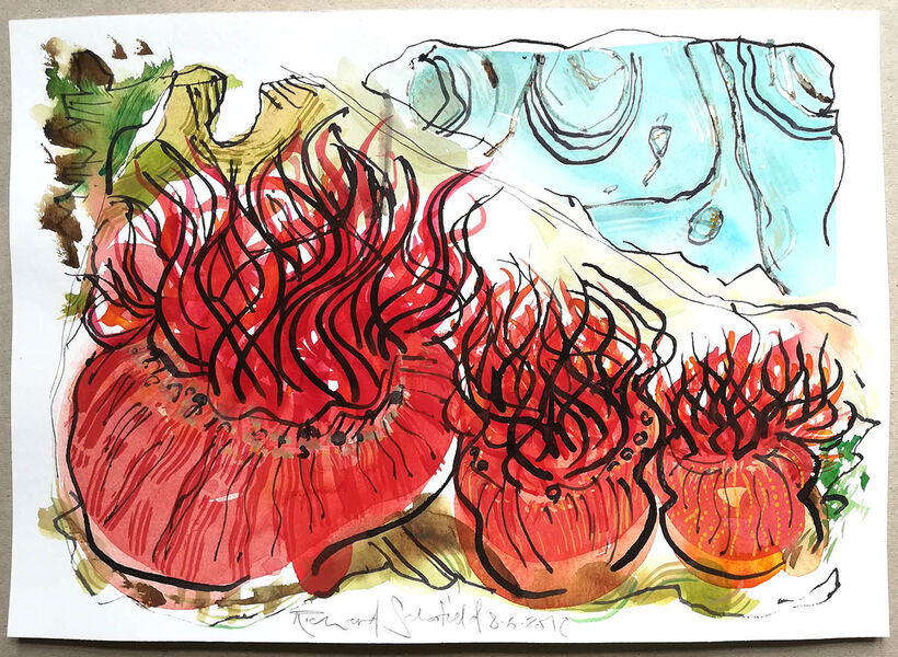 Red Anemone Realm #4