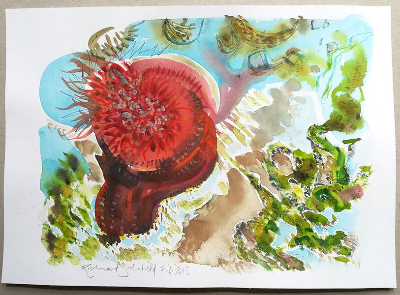 Red Anemone Realm #8
