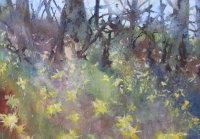 March - Wild Daffodils