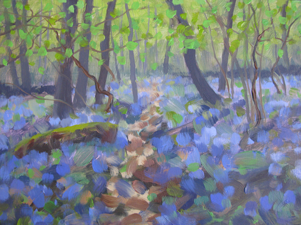 May - Heady Scent of Bluebells