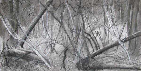 September -  Woodland Interior