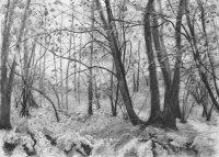 November - Lea & Paget's Wood, Autumn
