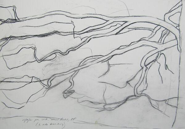 charcoal and pencil sketch oak