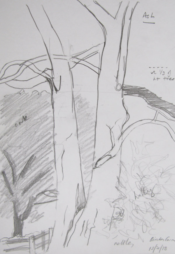 Ash - sketch