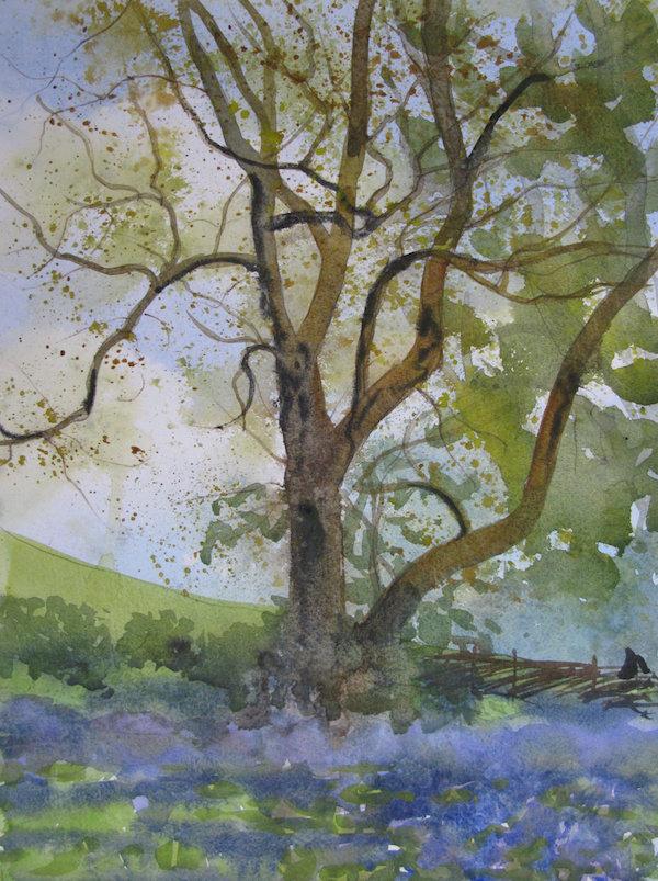 Ash & Bluebells - sketch