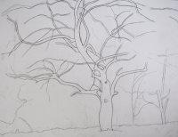 Beneath the Spreading Apple Tree - study